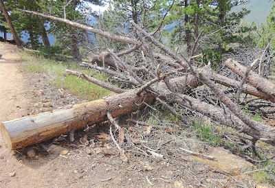 fallen tree, Rocky Mountain National Park