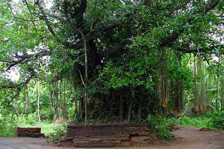 Kavu – Sacred Grove – Worship Places with Trees and Shrubs in Kerala