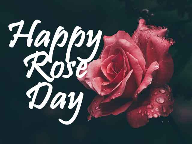 happy rose day 2022 images download