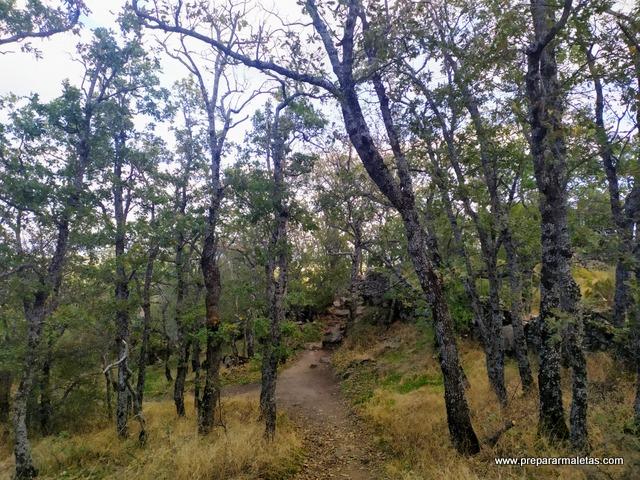 vegetación en el bosque de la Herrería Escorial