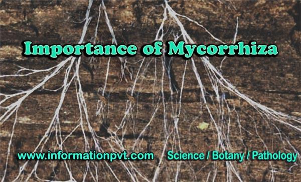 Importance of Mycorrhiza (poster)