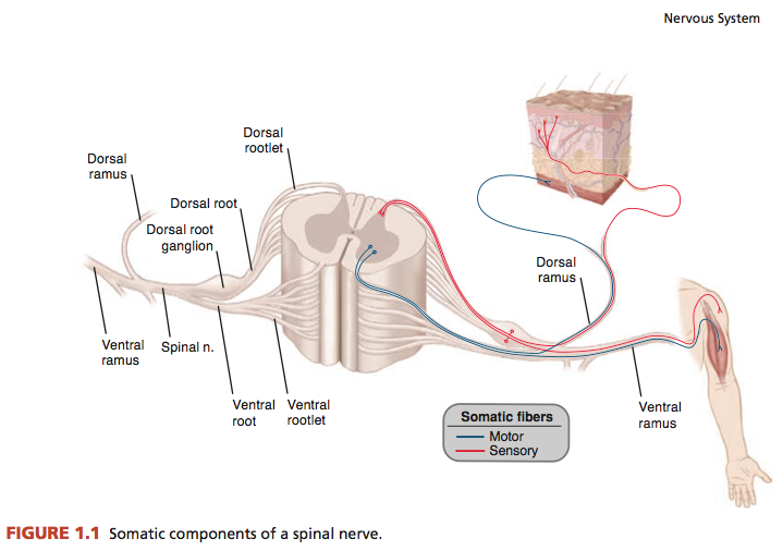 e la risposta alla palpazione (dato che tipicamente il dolore aumenta con la  palpazione). 3e54db9e2da4