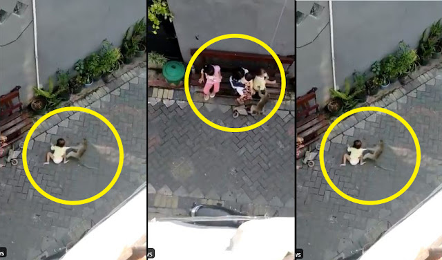 Monkey caught on camera Attempting to Kidnap 2 years-Old- Baby [Video]