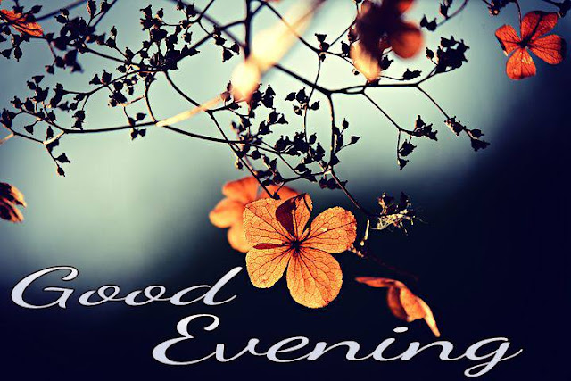 Good evening with flowers messages
