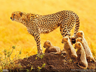 animal with their kids national geographic