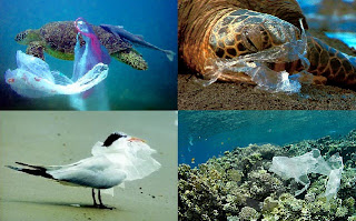 Image result for plastic bags animals