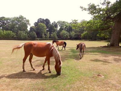 Mudchute farm - horses