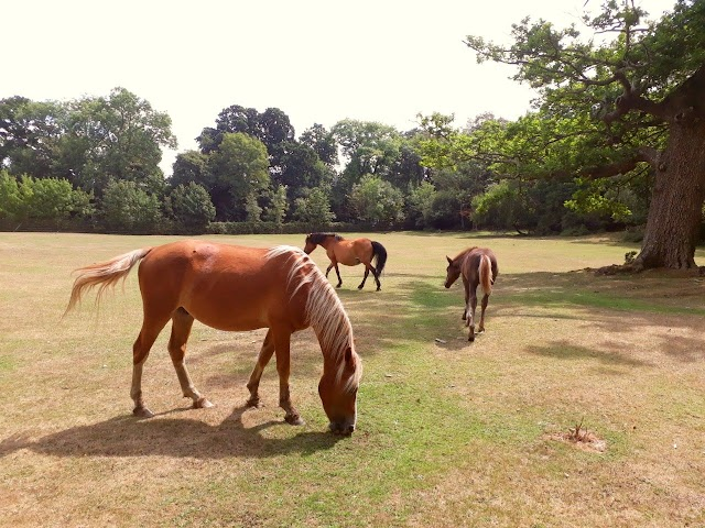 Mudchute Park and Farm - the hidden gem in the City Centre of London