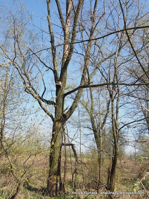 grzyby nadrzewne, huba, huby, las legowy, legi, nad rzeka, warszawa, spacer, wycieczka, piekny dzien, na grzyby, grzybobranie