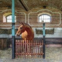 Ekeygames - Ekey Horse B…