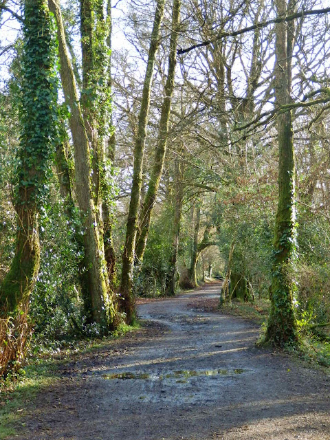 Woods at Pentewan, Cornwall