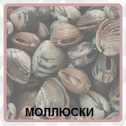 600 слов лежат в большом количестве моллюски 10 уровень
