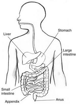 Appendix Pain Location Diagram, Appendix, Free Engine ...