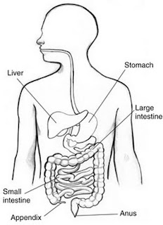 Appendix Pain – Location, Causes, Diagnosis, Treatment and ...