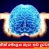 මිනිස් මොළය ගැන තව දුරටත් (More About The Human Brain)
