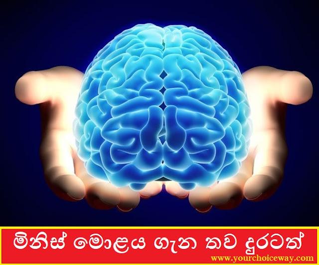 මිනිස් මොළය ගැන තව දුරටත් (More About The Human Brain) - Your Choice Way