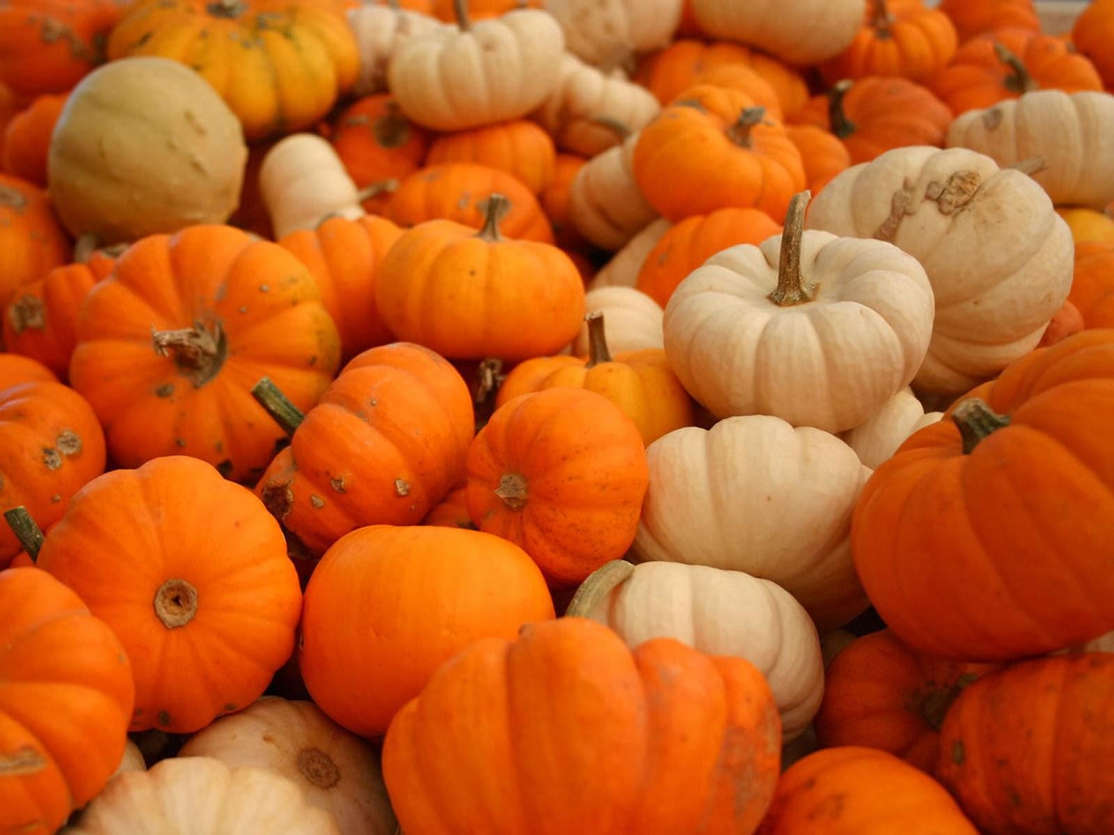Wallpapers pumpkin wallpapers - Pumpkin wallpaper fall ...