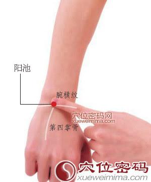 陽池穴位 | 陽池穴痛位置 - 穴道按摩經絡圖解 | Source:xueweitu.iiyun.com