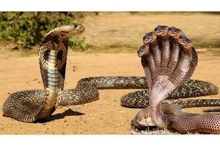 معنى الثعابين في منام الرجل