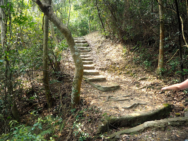 Stairs on the forest trail in Kam Shan Country Park on the Monkey Mountain hike, New Territories, Hong Kong