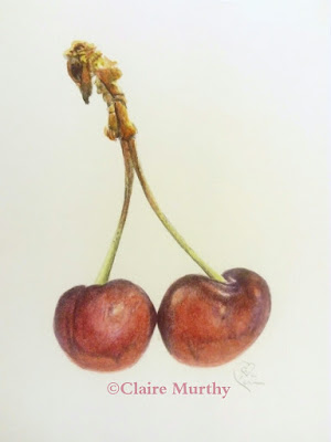 watercolour painting of cherries botanical