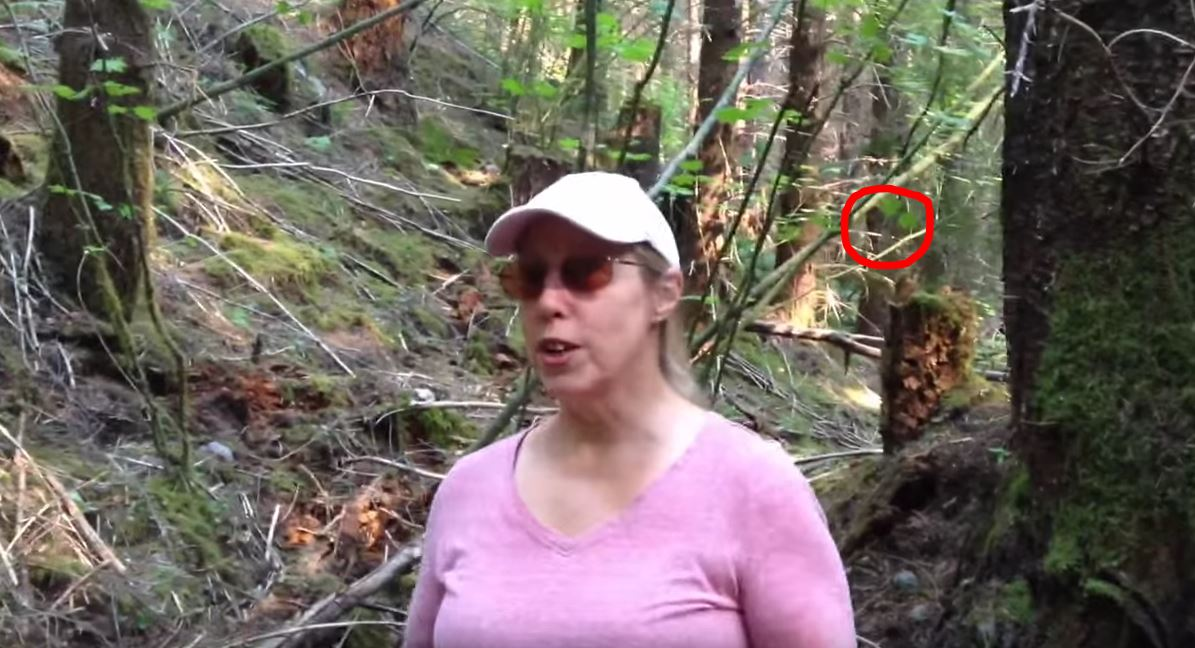 This Woman Used Spy Gear To Try And Record Bigfoot