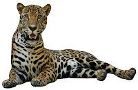 Jaguar o Yaguar