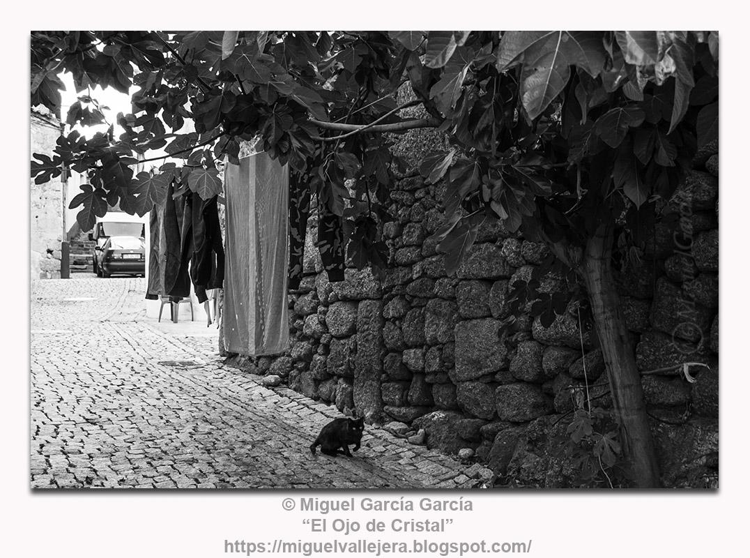 Gato y ropa tendida en calle de la judería de Belmonte, Portugal