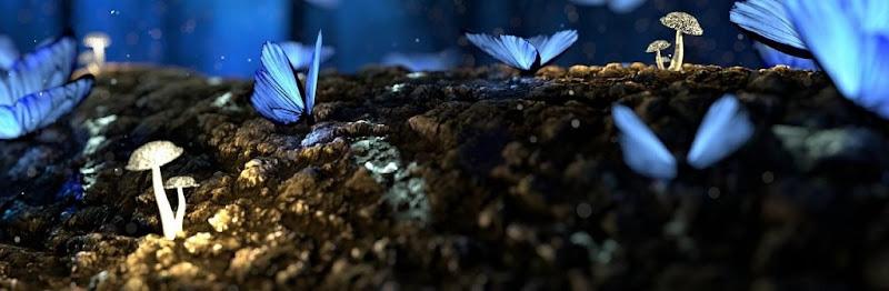 山中の土に青い蝶が舞い、キノコが生えている