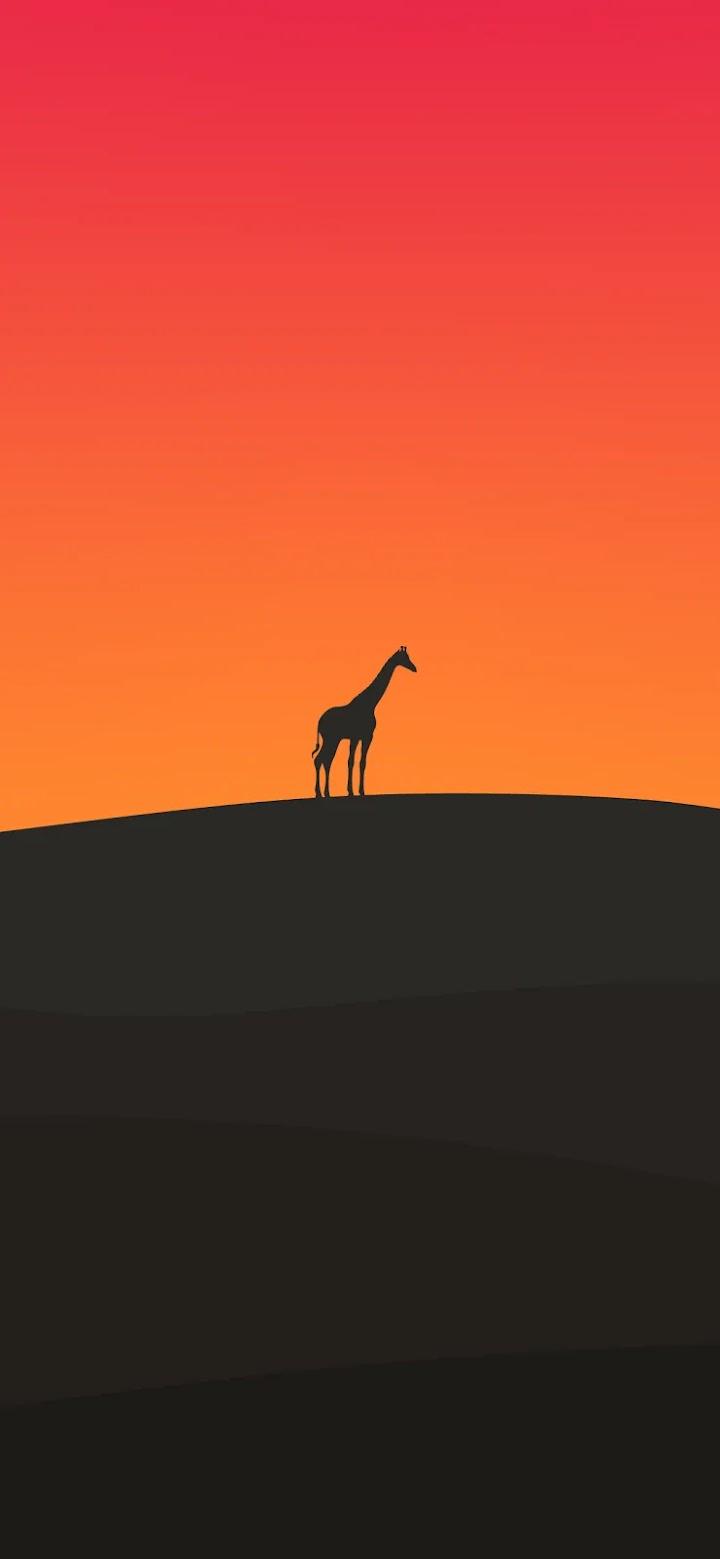 minimalist-iphone-wallpaper-giraffe