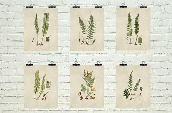 Vintage Fern Botanicals