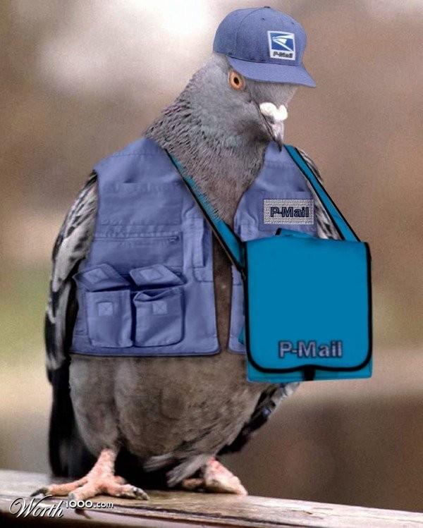 Почтовый голубь смешные картинки