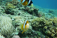 Snorkeling - Lombok Tour Package