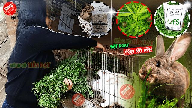 Top 3 giống cỏ nuôi thỏ tốt nhất hiện nay