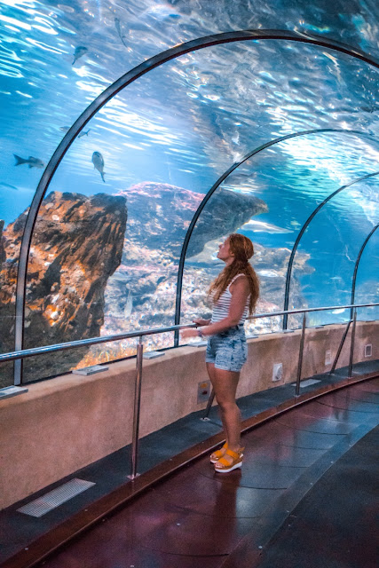 barcellona-pass-aquarium-barcellona-credit-to-poracci-in-viaggio