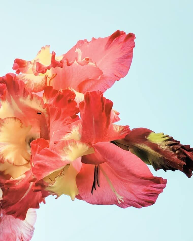 Iris flower against blue sky | cardboardcities
