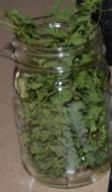 drying herbs, drying cilantro, dehydrating cilantro, dehydrating herbs, how to dehdyrate cilantro at home, a steady supply of cilantro, never run out of cilantro again