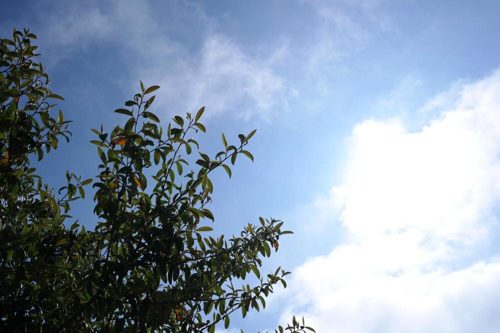 This Little Big Life: Rowan tree on sunny day