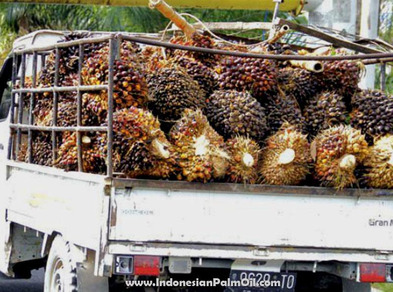 industri kelapa sawit indonesia yang berkelanjutan