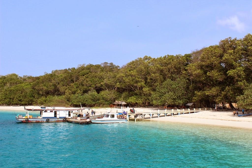 Babi Hutan Pulau Peucang, Ujung Kulon ~ Farizan's Blog