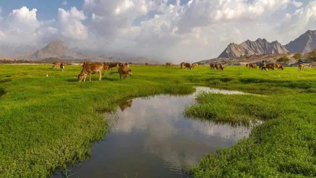 Wadi al-bardani