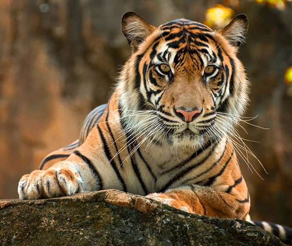 khatarnak tiger ka photo खतरनाक बाघ का फोटो डाउनलोड