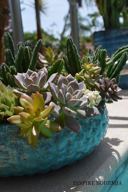 Poolside Succulent Planters - Designer Cactus and Succulent Planters Garden Design Inspire Bohemia - Miami and Ft. Lauderdale Succulent Business