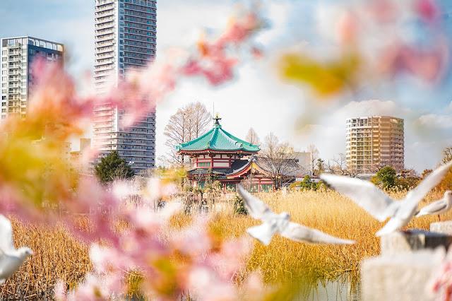 弁天堂,上野公園,不忍池