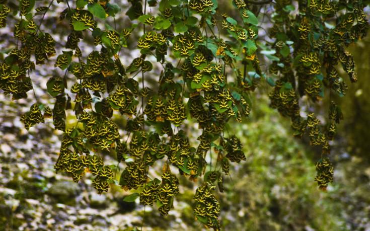 Butterflies valley Rhode island Greece, butterfly valley,