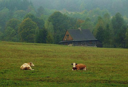 Pastwiska po zachodniej stronie drogi.