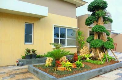 Taman dengan bonsai dolar