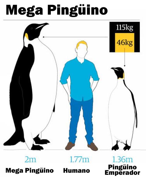 Antártida Argentina: El superpingüino antártico hallado por ...