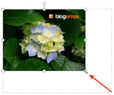Cara Memperkecil Foto secara Online di Fotor