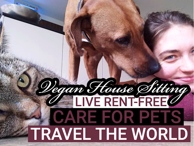 vegan house sitting